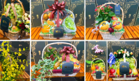 Quà tặng trái cây nhập khẩu