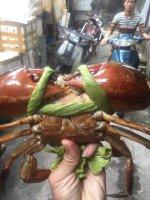Cua Biển Kiên Giang