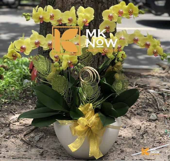 Lan hồ điệp Phát Tài - DHNK05